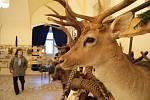 Stovky lidí navštívily v sobotu už třetí Svatohubertské slavnosti na zámku v Boskovicích. Na programu byly například ukázky práce s koňmi, přehlídka loveckých psů, vystoupení sokolníků či výstava loveckých trofejí a zbraní.