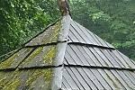 V Moravském krasu letos sokoli stěhovaví vyvedli na dvou místech celkem pět mláďat. Na snímcích mládě sokola v blízkosti Býčí skály.