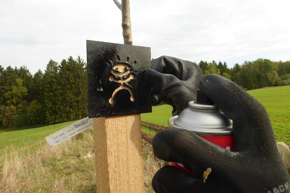 V Moravském krasu dobrovolníci vysázeli ovocné stromy.