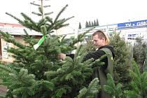 Jedle, nebo smrček? Začal prodej vánočních stromků a je na výběr: z místního lesa, z plantáže, v květináči nebo stromek z Dánska.