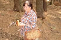 Milada Kašpárková ze Šošůvky chodí na houby chodí už od mládí, kdy jí s sebou do lesa brávala babička. A tato záliba ji vydržela až do důchodu.