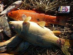 Ve dvou rybnících u Sudic uhynuly nejméně dva tisíce ryb.