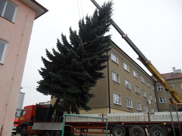 Vánoční strom na blanenském náměstí Republiky letos městu věnoval třiašedesátiletý Rudolf Lakota.