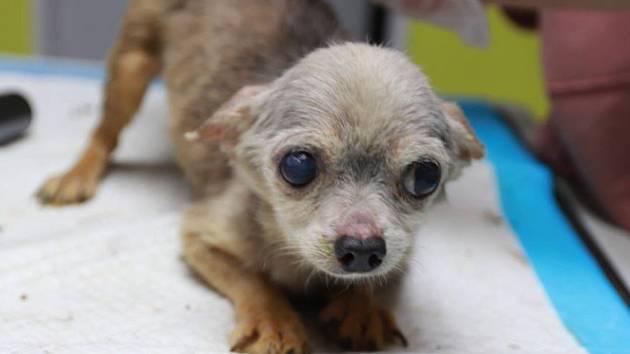 Dejte nám šanci. V Hospici pro staré, týrané a handicapované psy v Bukovince se starají i o zubožená zvířata nalezené u chovatelky v Kamenici nad Lípou.