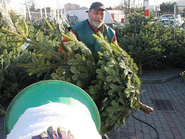 Na Blanensku začal prodej vánoních stromků.