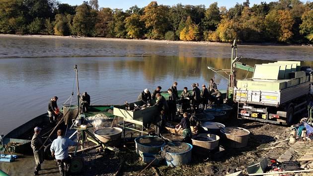 Rybníkáři zahájili výlovy lednicko-valtických rybníků. Začali tím Hlohoveckým. Přitom budou prodávat kapry přímo na hrázi.