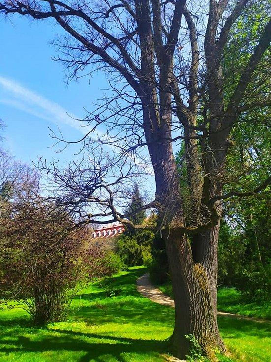 Z procházky zámeckým parkem v Rájci.
