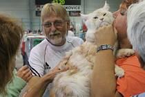 Boskovický zimní stadion zaplnila dvoudenní Mezinárodní výstava koček. Ta se v Boskovicích konala již potřetí.