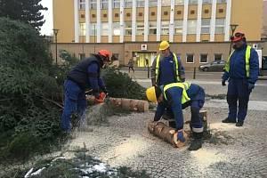 V Blansku pracovníci technických služeb vánoční strom (nas snímcích) odzdobili a pokáceli v úterý. Ořezali větve a kmen rozřezali na špalky.