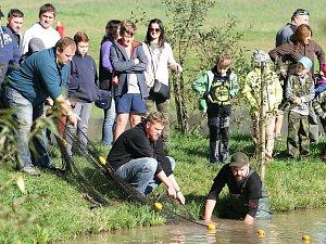 Rybáři natáhli sítě na Klemovském rybníku. Na břeh se podíval i trofejní jeseter
