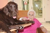 Canisterapie v blanenské nemocnici.
