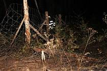 Ve čtvrtek večer hořela v Zábludově část lesa.