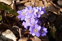 Jaro v Rakoveckém údolí.