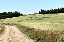 Pravidelný obrazec, který se objevil v poli u Rozseče nad Kunštátem, tvoří soustava kruhů.