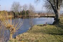 Rybník ve Vanovicích může v budoucnu sloužit jako přírodní čistírna odpadních vod.