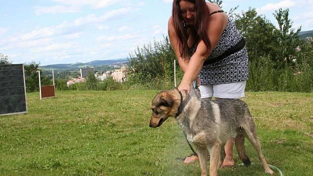 Vedoucí blanenského útulku pro psy Jarmila Jurová osvěžuje vodou jednoho z psů.