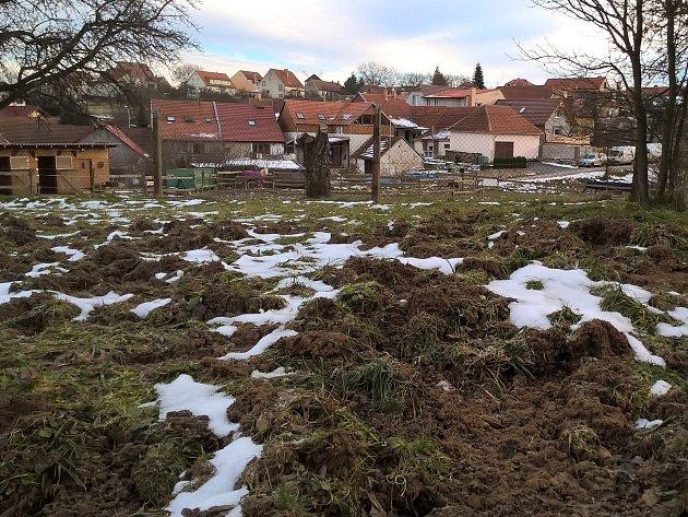 Divoká prasata rozryla zem okolo rybníka Šístý v Rudici.