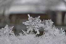 Jemnou krásu sněhových vloček zachytila čtenářka Vlasta Zlámalová. Foto: Vlasta Zlámalová