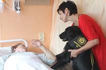 Canisterapie v blanenské nemocnici. Ilustrační foto.