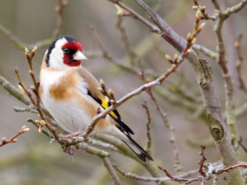 Ptáci pózují u krmítek. Ládují se slunečnicemi.
