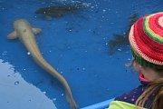 Jedovnice ovládl dvoudenní výlov rybníku Olšovec.