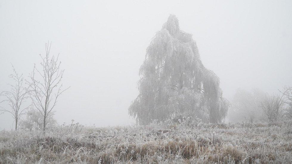 Mrznoucí mlha obaluje stromy námrazou.