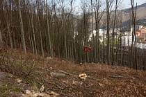 Lesníci ze Školního lesního podniku Křtiny se v Adamově před časem pustili do těžby listnatých stromů ve stráni nad železnicí.