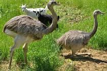 Zvířata jsou vděčnou atrakcí pro turisty. Na Blanensku na ně sázejí ranče, hotely i na zámku.