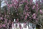 Procázka mezi jarními květy ve Zborovcích.