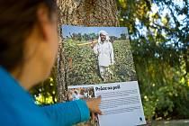 Návštěvníci blanenského zámeckého parku si v těchto dnech prohlédnou na tamních stromech výstavu fotografií. Přibližuje podmínky na bavlníkových polích v Indii.