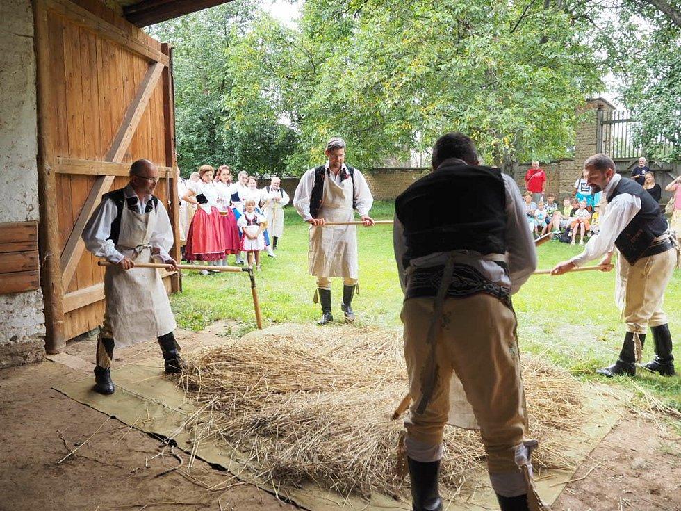 Soubor Kořeňák předvádí při dožínkách mlácení obilí.