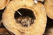 Těžba dřeva. Ilustrační foto