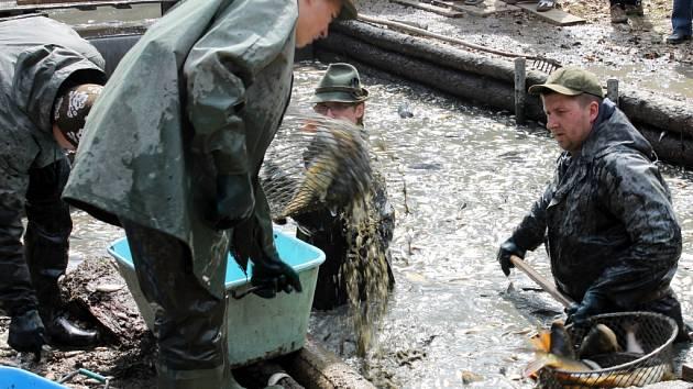Jedovnické rybáře čekal výlov rybníka Budkovan. Ryby putovaly do přepravních kádí, které pak nákladní auta odvezla k Olšovci. Tam budou i nadále až do říjnového výlovu. Do Budkovanu rybáři nasadí nové ryby.
