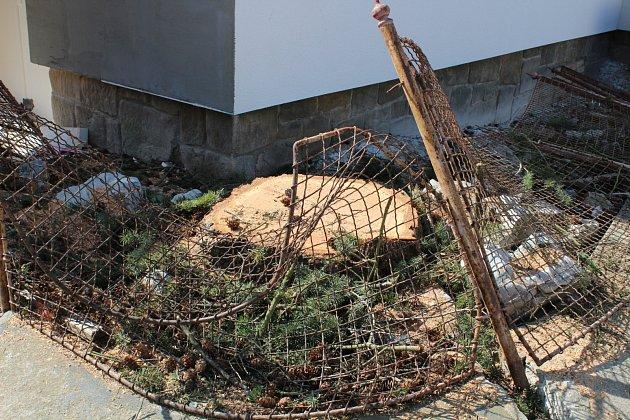 Dvě vzrostlé douglasky na ulici Rodkovského vBlansku ničily svými kořeny kamenné oplocení a hrozily pádem. Zůstaly po nich jen pařezy.