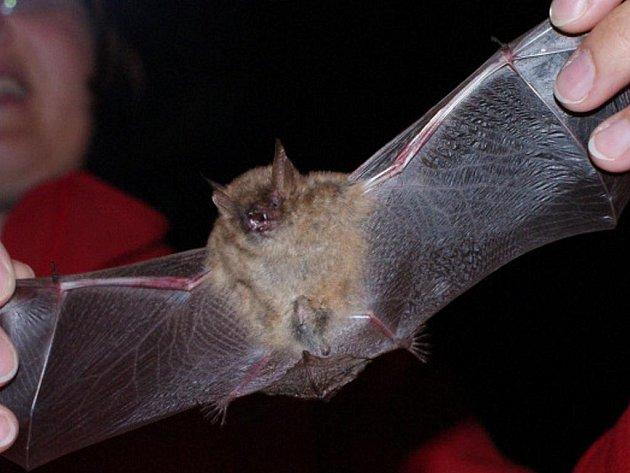 V jeskyni Výpustek v Moravském krasu se konala Noc pro netopýry.