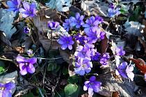 Z jarní vyjížďky z Bačova do Kladorub. Foto: Barbora Palánová