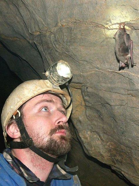 Aby  netopýry spočítali, musí se za nimi lidé často plazit nebo lézt po žebřících.