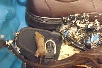 Inspekce uzavřela Penny Market v Letovicích, ve skladu se nacházelo i myší hnízdo.