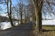 Oprava rozbité silnice mezi Velkými Opatovice a letovickou částí Chlum je na severu okresu Blansko top téma posledních měsíců. Hlavně kvůli stoletému a šest set metrů dlouhému stromořadí lip, takzvané Svárovské aleji.