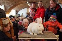 Výstava králíků v Lysicích