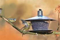 Ornitologvé k zimnímu sčítání ptáků, tentokrát u krmítka třeba doma ma zahradě.  Foto:Monika Stružinová