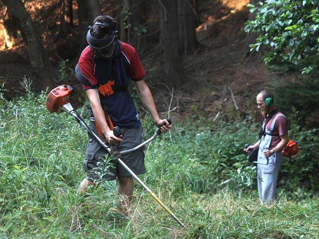 Dobrovolníci kosili v krasu plevel a čistili stráně od náletů. Opravovali také oplocenky.