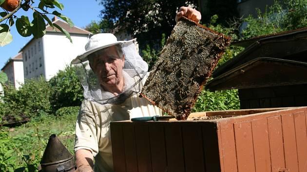 Bída, hody, slušná snůška. Tak hodnotí včelaři na Blanensku poslední tři roky. Oproti loňsku stočili letos o něco méně medu. Ceny však zůstávají stejné. Za kilo medu zaplatí lidé kolem sto padesáti korun.