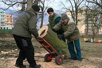 Kácení starých stromů v zámeckém parku v Blansku.