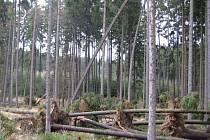 Silný vítr s sebou bral i vzrostlé stromy.