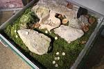 Stříbrný poklad z třináctého století uvidí návštěvníci Domu přírody Moravského krasu do konce letošního roku, pak se přesune do Muzea Blanenska.