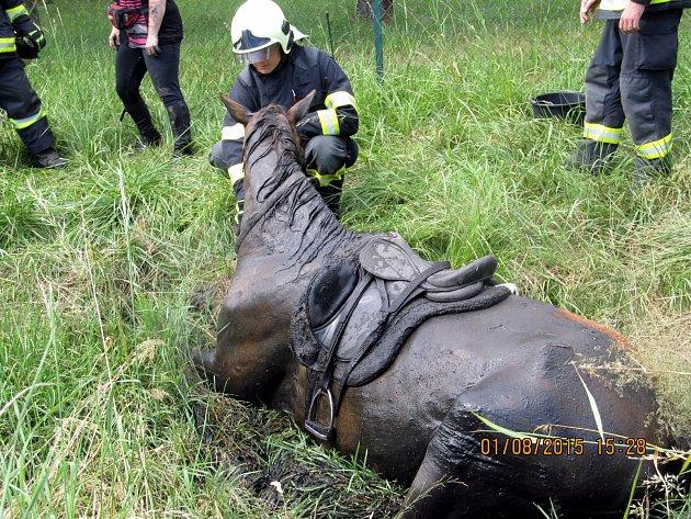 Koně zachraňovali zbláta hasiči vKnínicích uBoskovic.