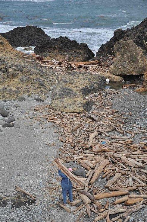 po tajfunu jsou na pobřeží vyplavené tuny dřeva