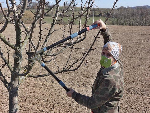 Nabroušený nůž, roubovací páska, štěpařský vosk a na zádech otep roubů do volné krajiny. Stakovou výbavou každé jaro vyráží do přírody Zdeněk Špíšek zBlanska. Stejně jako jeho děda, který ho učil roubovat, hledá vterénu podnože pro budoucí ovocné strom