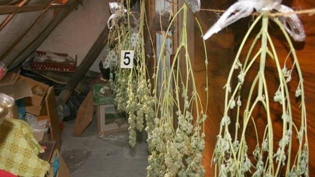 Tři zabavené varny pervitinu a tři objevené pěstírny konopí. To je výsledek policejního zátahu na drogové dealery a výrobce drog na Blanensku.